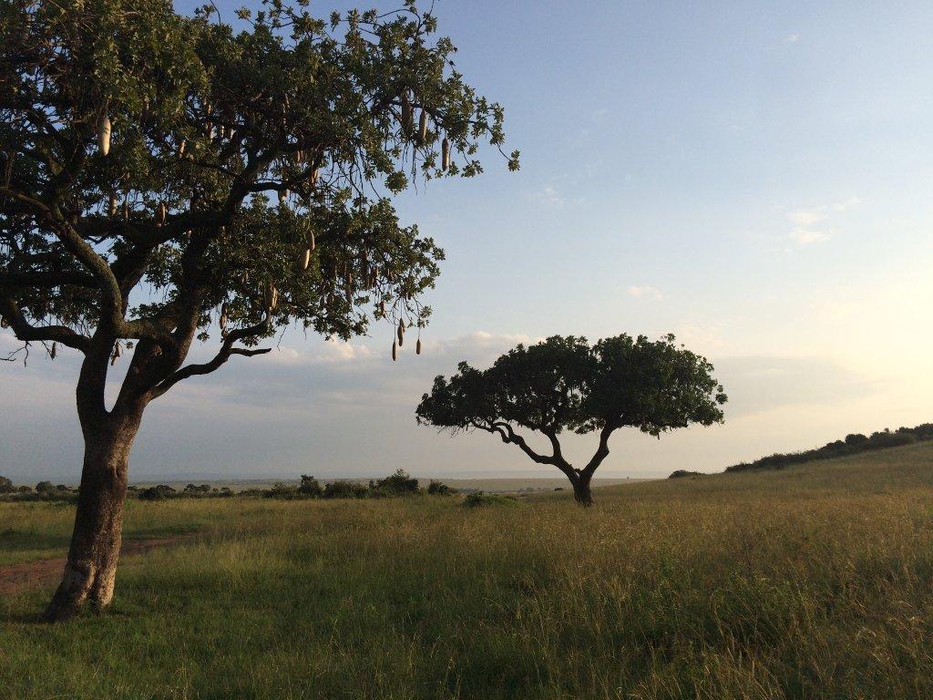 Individualreisen nach Afrika